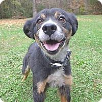 Adopt A Pet :: Cole - Mocksville, NC