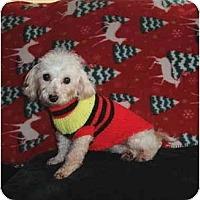 Adopt A Pet :: Samantha - Mooy, AL