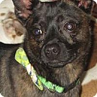 Adopt A Pet :: Yoyo - Covington, KY