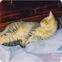 Adopt A Pet :: Fern - Fayette, MO