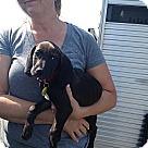 Adopt A Pet :: Willie Nelson