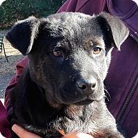 Adopt A Pet :: *Cowboy - PENDING - Westport, CT