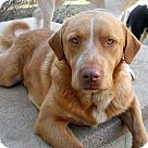 Adopt A Pet :: KOJO