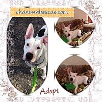 Adopt A Pet :: Diamond - selden, NY