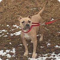 Adopt A Pet :: Pixie Stix - Bloomfield, CT