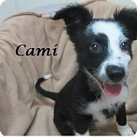 Adopt A Pet :: Cami - Bartonsville, PA