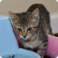 Adopt A Pet :: Gemma & Emma - Sacramento, CA