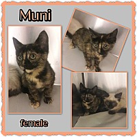 Adopt A Pet :: Muni - Richmond, CA