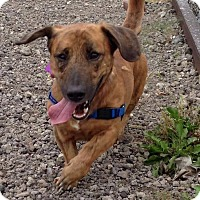 Adopt A Pet :: Hank - Youngstown, OH