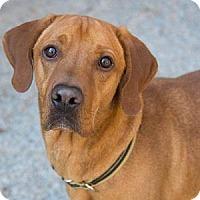 Adopt A Pet :: SAUL - Decatur, GA