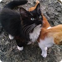 Adopt A Pet :: Whiskas - Fischer, TX