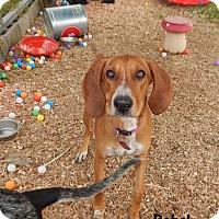 Adopt A Pet :: Rebel - Washington, PA