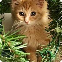 Adopt A Pet :: Olivia - Leonardtown, MD