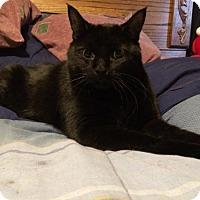 Adopt A Pet :: Aiko - Glendale, AZ