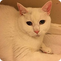 Adopt A Pet :: Kotya - Columbus, OH