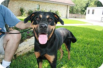 Rottweiler Mix Dog for adoption in san antonio, Texas - Darla