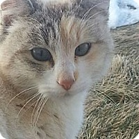 Domestic Shorthair Cat for adoption in Ogden, Utah - Feral Cats