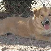 Adopt A Pet :: Annie - Golden Valley, AZ