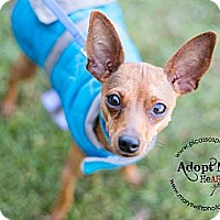 Adopt A Pet :: Boris - Myersville, MD