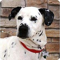 Adopt A Pet :: Stud - Newcastle, OK