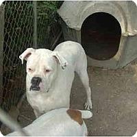 Adopt A Pet :: Vinnie - Julian, NC