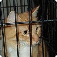 Adopt A Pet :: Mimi#2 - Westfield, MA