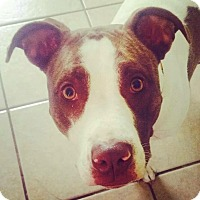 Adopt A Pet :: Zoey - Lima, OH