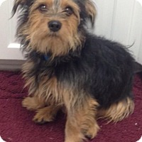 Adopt A Pet :: Teddy - E. Greenwhich, RI