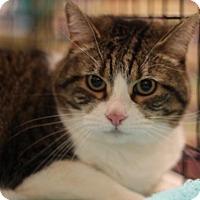 Adopt A Pet :: Kittsie - Sacramento, CA