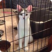 Adopt A Pet :: Corey - Horsham, PA