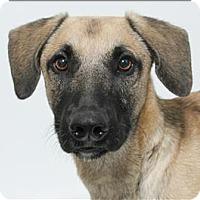 Adopt A Pet :: Ludwig - San Luis Obispo, CA