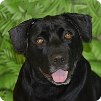 Adopt A Pet :: Fred - Englewood, FL