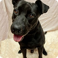 Adopt A Pet :: ODEE - New Manchester, WV