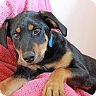 Adopt A Pet :: Smith