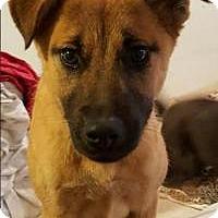 Adopt A Pet :: Chanel - Costa Mesa, CA