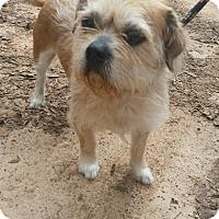 Adopt A Pet :: Watson - Lebanon, CT