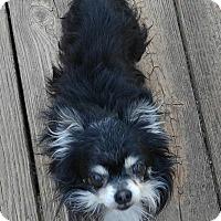 Adopt A Pet :: Chico - Matthews, NC