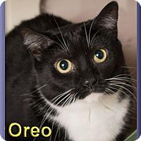 Adopt A Pet :: Oreo - Aldie, VA