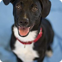 Adopt A Pet :: Oreo - Bradenton, FL
