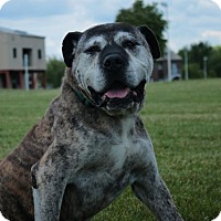 Adopt A Pet :: Hooch D-69962  **In Foster** - Westampton, NJ