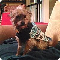 Adopt A Pet :: Bartt - Alpharetta, GA