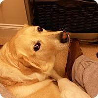 Adopt A Pet :: Candace - Huntsville, AL