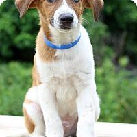 Adopt A Pet :: Avalon - Waldorf, MD