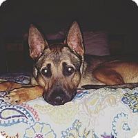 Adopt A Pet :: Padfoot - Morrisville, NC