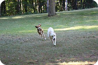 German Shepherd Dog/Husky Mix Puppy for adoption in Colborne, Ontario - Dex