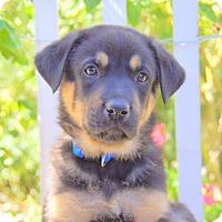 Adopt A Pet :: Irwin von Portia - Thousand Oaks, CA