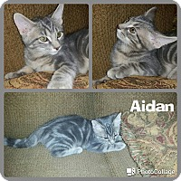 Adopt A Pet :: Aidan - Arlington/Ft Worth, TX