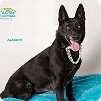 German Shepherd Dog Dog for adoption in Camarillo, California - SOPHIE