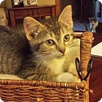 Adopt A Pet :: Jay-Jay - Kohler, WI