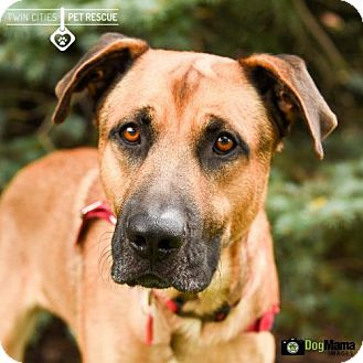 Shepherd (Unknown Type) Mix Dog for adoption in St Paul, Minnesota - Leonard Bernstein